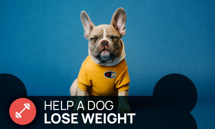 how to help my dog lose weight