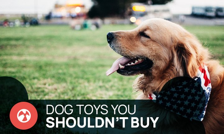 dog toys you shouldn't buy your dog