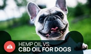 hemp oil vs cbd oil for dogs