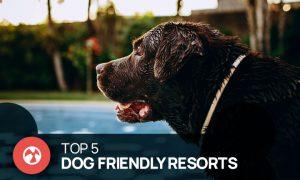 dog friendly resorts