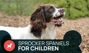 Sprocker Spaniels for children