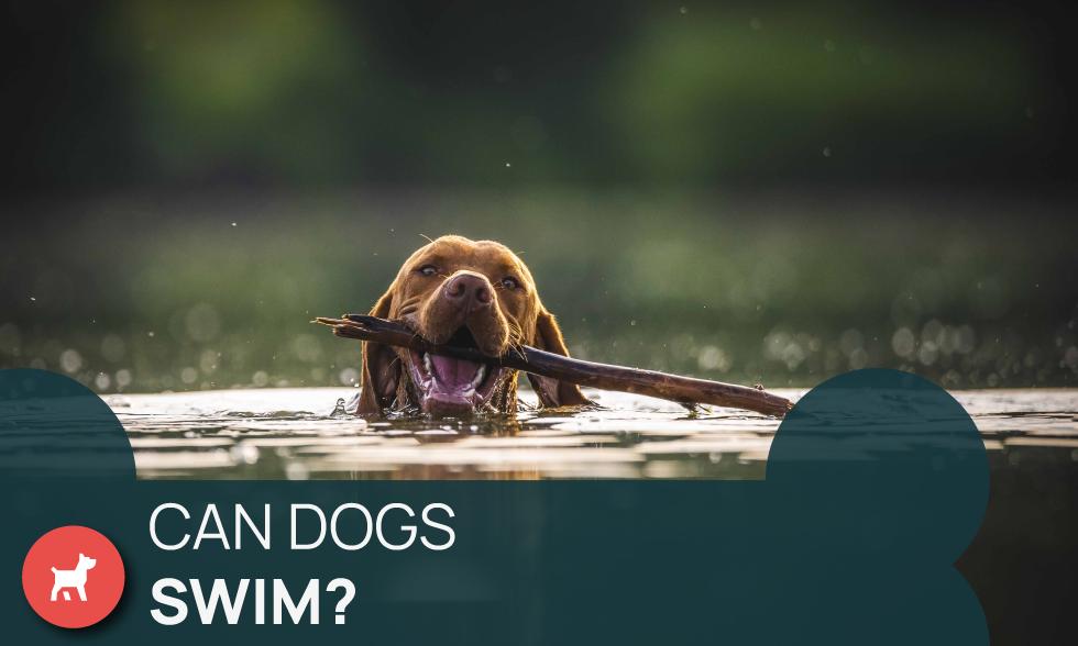 can dogs swim