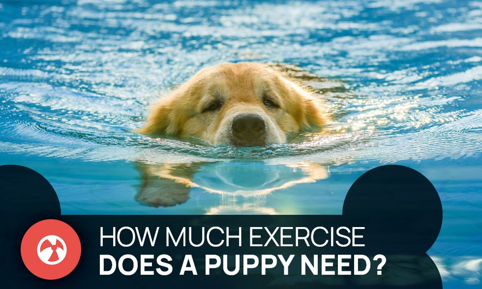 how much exercise does a puppy need